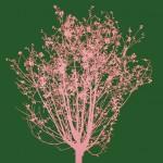 Fernando-De-Filippi,-Vento-che-parli-con-voce-leggera-di-foglie,-acrilico-su-tela,-cm-100x100