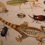 Jan van Kessel il Vecchio, Studio di farfalle e altri insetti, dettaglio