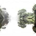 Foresta sacra