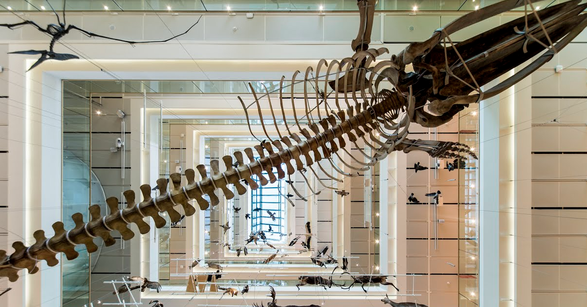 Google ci porta all'interno dei musei riportando in vita i dinosauri