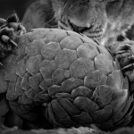 © Lance-van-de-Vyver_Wildlife Photographer of the year, Black and White Finalist