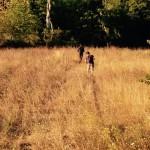 Sara Lenzi - field recording 2