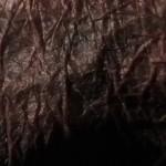 01_Anto. Milotta e Zlatolin Donchev_Diapositiva della serie PELLE (80 elementi, 24x36mm, colore) 2018