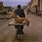 Fotografia: gli Animals di McCurry inaugurano Mudec Photo