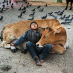 3Steve McCurry , Animals