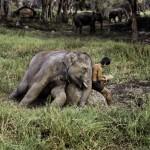 6Steve McCurry , Animals