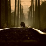 Martin Cooper (Canada) On the tracks of a coyote Wildlife Photographer of the Year 2011