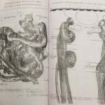 _B_-SISSI-Anatomia-parallela-I-