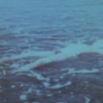 Ocean Bird Wash Up still