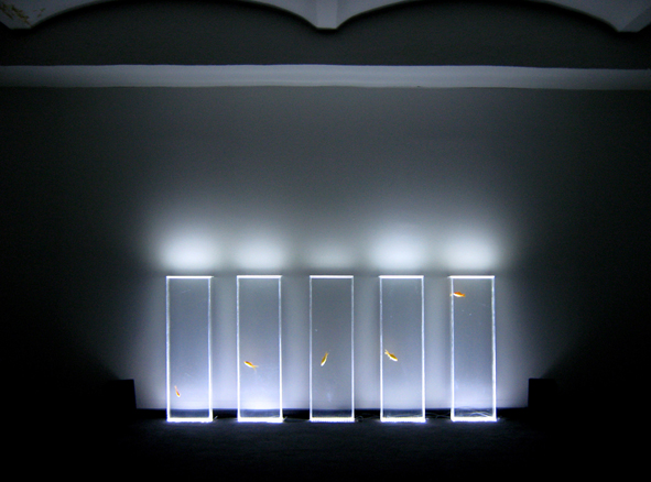 Quiet ensemble, Quintetto, 2008, installazione, acqua, plexiglass, pesci rossi