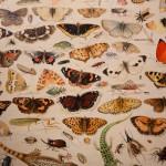 an van Kessel il Vecchio, Studio di farfalle e altri insetti, dettaglio