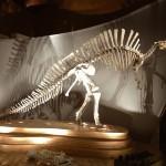 Veduta del Museo di Storia Naturale_1