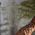 The Outsiders, Giraffe_Dunia Mauro_2014