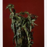Falls_Untitled (Life and death, gladiolas)_2 (2)