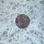 Opiemme, A Luciano Pivotto, spray e tempere su legno, 38x46, 2015 A