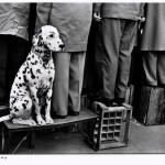 Walter Vogel, Dalmatiner … Kein Interesse an Fußball, Düsseldorf, 1956 © Walter Vogel