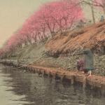 Cherry blossom at Mukojima, Tokyo, 1907 - 1918