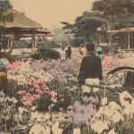 Iris garden at Horikiri, Tokyo, 1907 - 1918