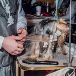 2 Cait Oppermann, Westminster dog show