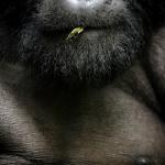 Chris Schmid, Switzerland, Shortlist, Professional, Natural World & Wildlife