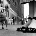 elliot-perros