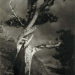 Anne Brigman, Dying cedar, Courtesy of the Nevada Museum of Art