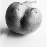 Bart Julius Peters, Pear © Bart Julius Peters courtesy Lunn Galerie