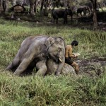 6Steve McCurry , Animals