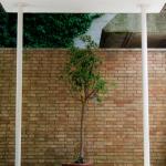 Carsten Holler, Smelling tree, 2018
