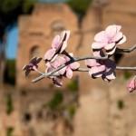 Hans Op de Beeck, Blossom Tree, 2018 ©ph_studiozabalik