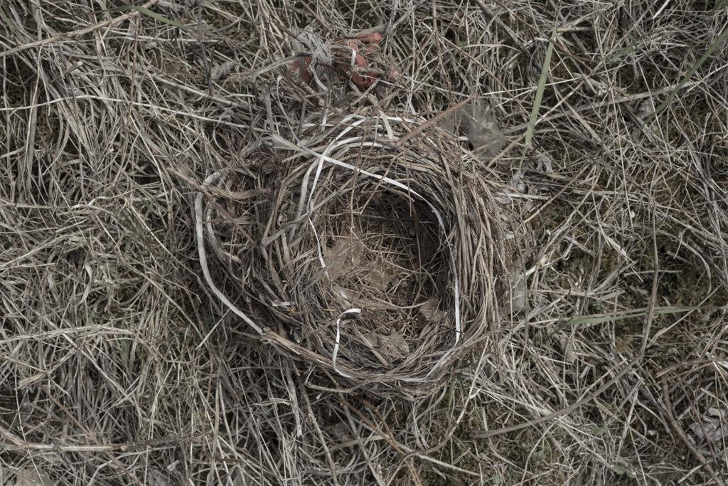 Ilaria Ferretti, Natura Italia, nido e insetto stecco, primavera 2020